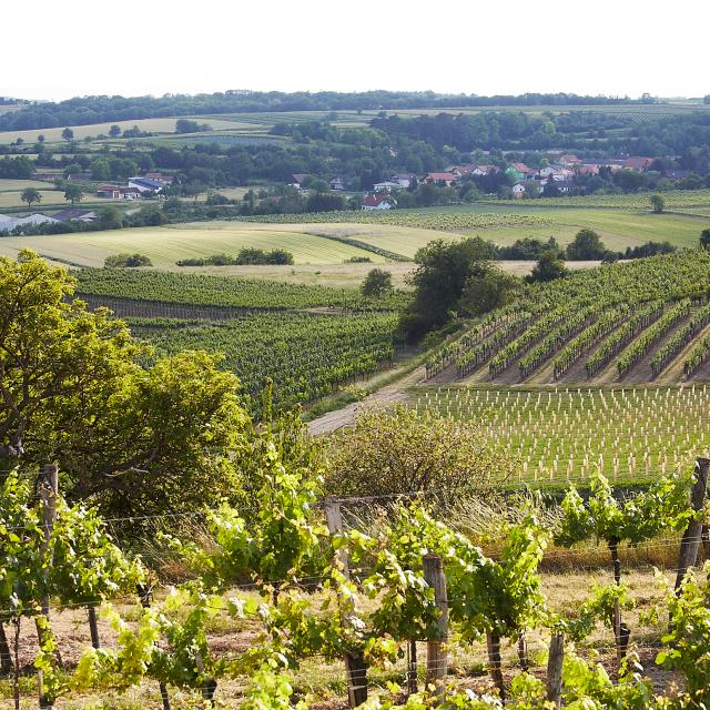 Landscape Schmidatal